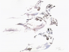 Hernandez-Fernandez-Francisco-Jose-Sandwich Terns in Salt Pan.jpg