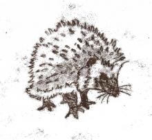 Richards-Deborah-Hedgehog.jpg
