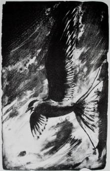 Scammell-Louise-Arctic Tern.jpg