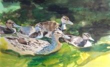 Storm-Lucinda-Mallard and Ducklings.jpg