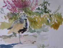 Thewlis-Richard-Golden Plover at Titchwell Norfolk.jpg