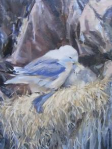 Thorley-Fox-Rebecca-Kittiwake Nest, St Abbs.jpg