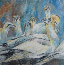 Williamson-Claire-Brooding Gannets.jpg