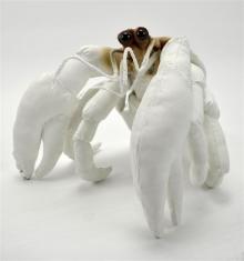 Wilson-Sally-The Recluse (Hermit Crab).jpg