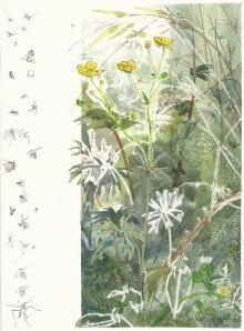 Porter-Rachel-Bardsey Wetlands, Insect Study.jpg
