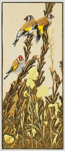 Greenhalf-Robert-Goldfinches-&-Evening-Primroses.jpg