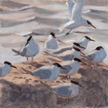 Greenhalf-Robert-Sandwich-Terns.jpg