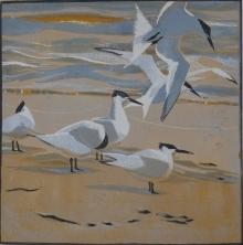 Greenhalf-Robert-Tideline-Terns.jpg