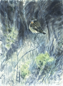 Johnson-Richard-Male-Whinchat---Blakeney.jpg