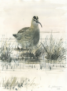 Johnson-Richard-Whimbrel---Burwell-Fen.jpg