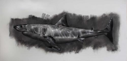 Akib-Jamel-Shark.jpg