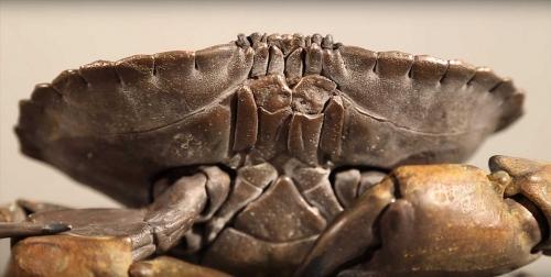 Odishow-Lee-Articulated-Bronze-Crab.jpg