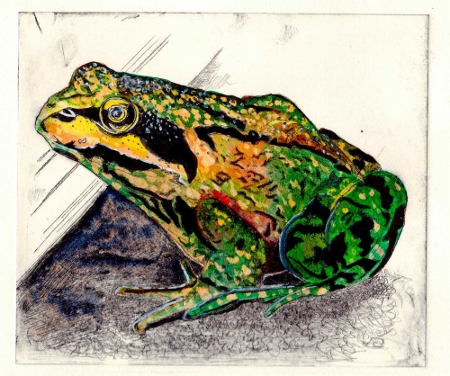 Baines-Julia-Greenhouse-Frog.jpg