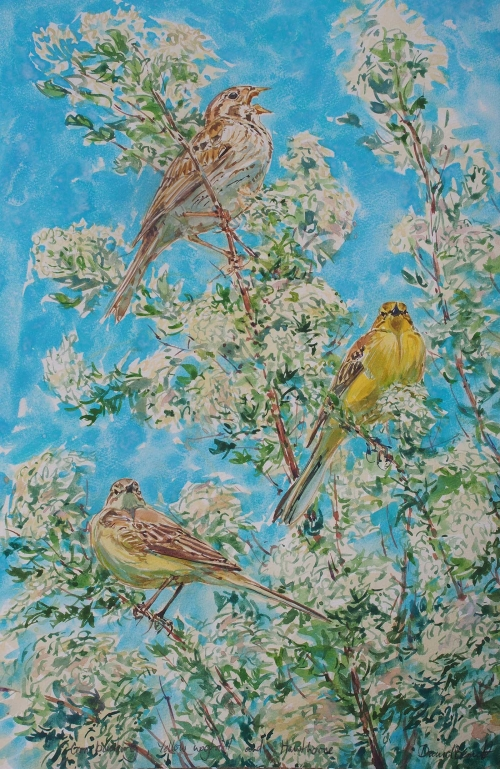 Bennett-David-Calling-Corn-Bunting-And-Yellow-Wagtails-In-Hawthorn-Blossom.jpg