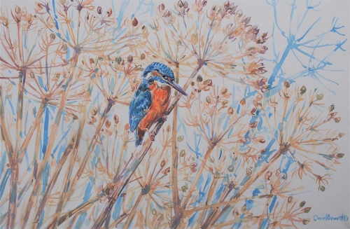 Bennett-David-Kingfisher-In-Hogweed.jpg