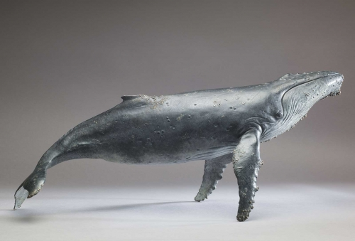 Bibby-Nick-Humpback-Whale-Extra.jpg