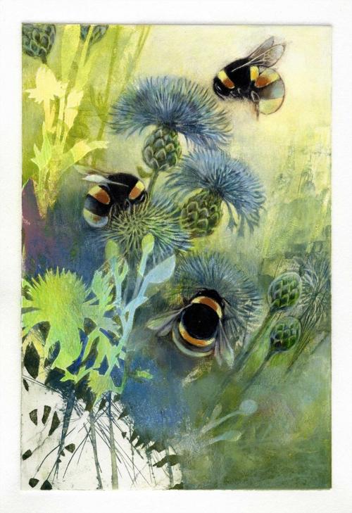 Bird-Louise-Bumblebees-on-Knapweed.jpg