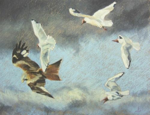Boensch-Stefan-Black-headed-Gulls-chasing-a-Red-Kite.jpg
