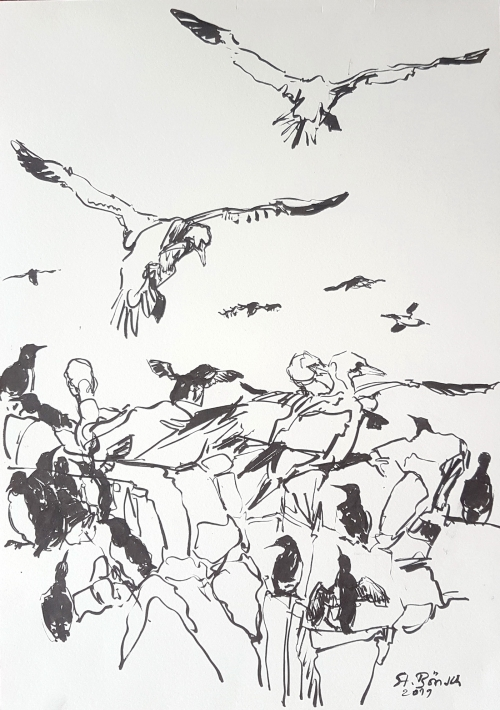 Boensch-Stefan-Gannets-and-Guillemots-around-the-same-top-of-the-cliff-.jpg