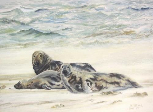 Boensch-Stefan-Grey-Seals-in-strong-wind.jpg