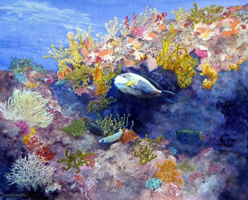 Borello-Wendy-Sohal-Surgeonfish-Acanthurus-sohal.jpg