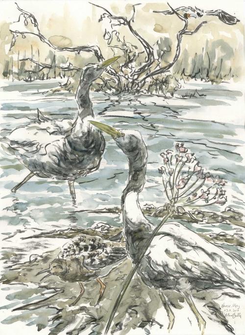 Brodde-Marco-Great-White-Egrets-and-Ruff.jpg