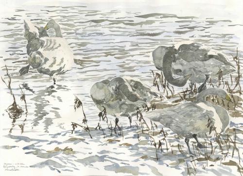 Brodde-Marco-Winter-Swans.jpg