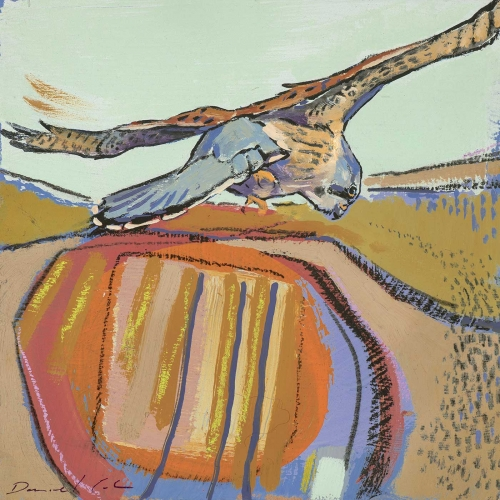 Cole-Daniel-Kestrel-Oil-on-board--19x19cm.jpg