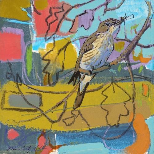 Cole-Daniel-Spotted-flycatcher.jpg