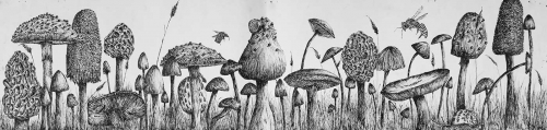 Collins-Isabelle-Sawtry-Village-Academy-Fungi-20x83cm-pen-ink-on-paper.jpg