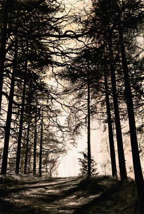 Conlon-Allison-Beyond-the-Trees.jpg