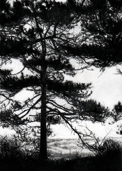 Conlon-Allison-Holkham-Pines.jpg