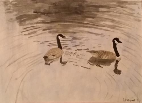 Davies-Sara-Canada-Geese-in-Brynmill-Park.jpeg