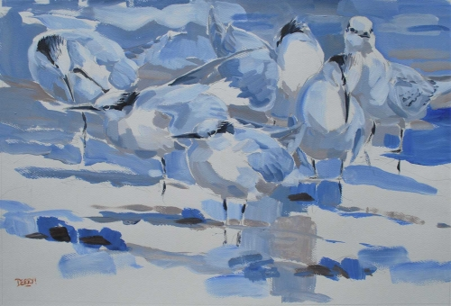 Derry-Nick-Loafing-Sandwich-Terns.jpg