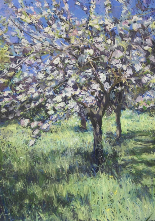 Diggle-Louise-Apple-Blossom.jpg