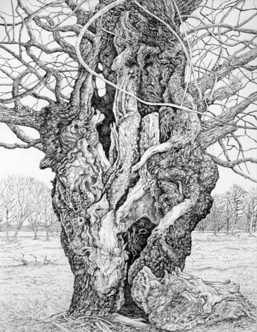 Durbin-Eleanor-Aged-Oak-Tree-Richmond-Park.jpg