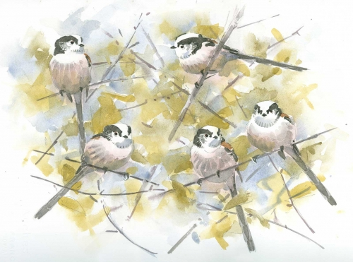 Dusen-Barry-van-Long-tailed-Tits.jpg