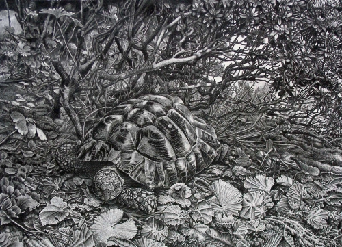 Edwards-Victoria-The-Hideout-Hermann-s-Tortoise.jpg