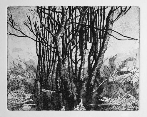 Fallah-Shokoufeh-From-the-Trees-Series.jpg
