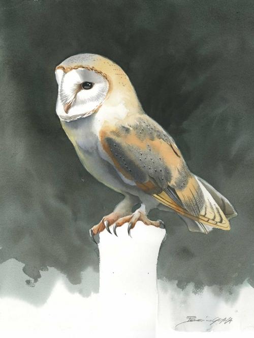 Gemma-Federico-Barn-Owl.jpg