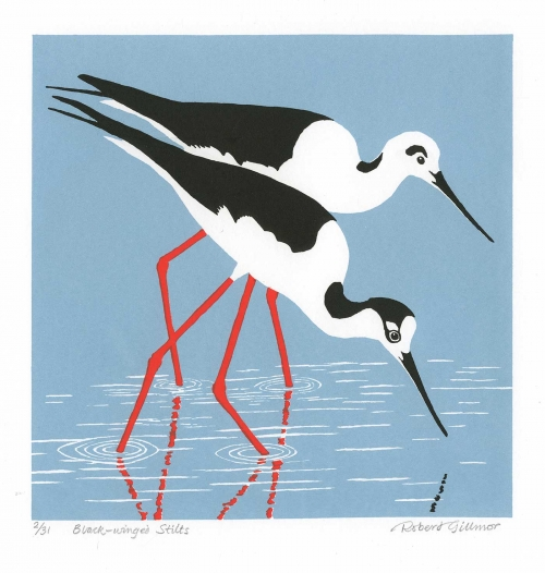 Gillmor-Robert-Black-Winged-Stilts.jpg