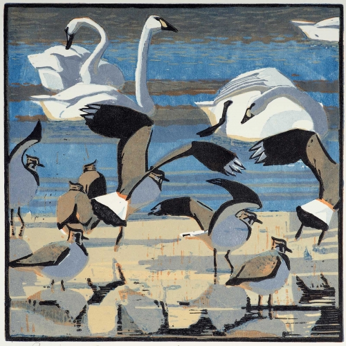 Greenhalf-Robert-Bewick-s-Swans-and-Lapwings.jpg