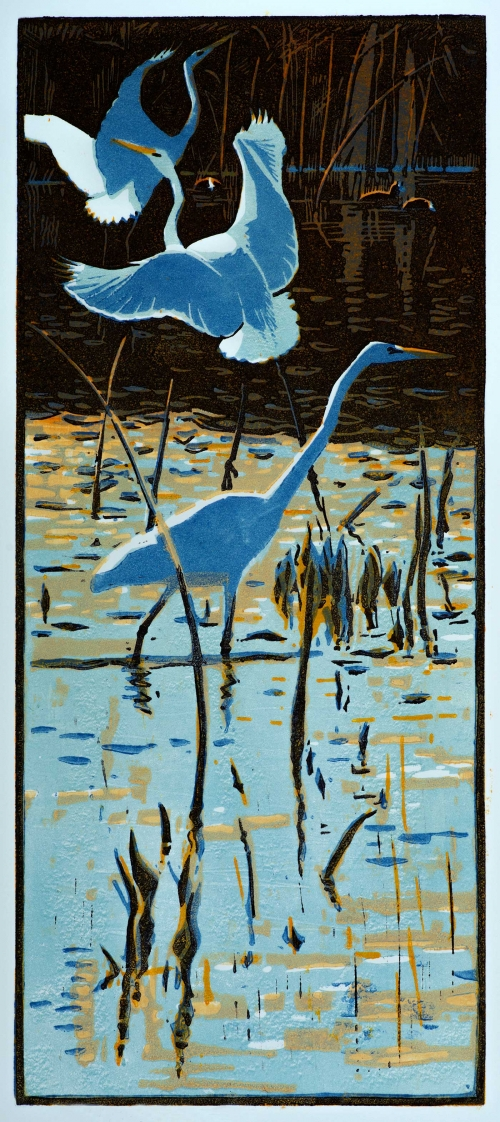 Greenhalf-Robert-Great-White-Egrets.jpg