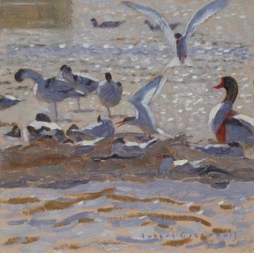 Greenhalf-Robert-Terns,-Avocets-And-A-Shelduck.jpg