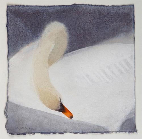 Harkess-Claire-Mute-Swan-II.jpg