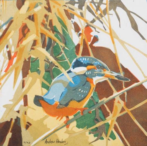 Haslen-Andrew-Kingfisher.jpg