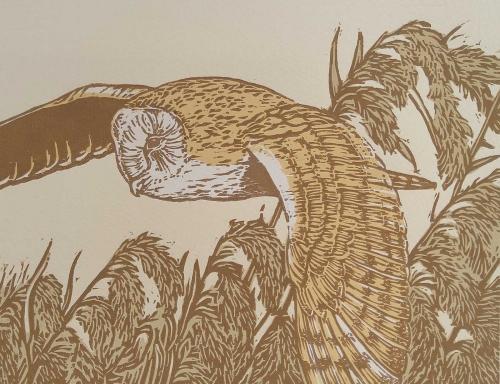 Hatton-John-Barn-Owl-over-reeds.jpg