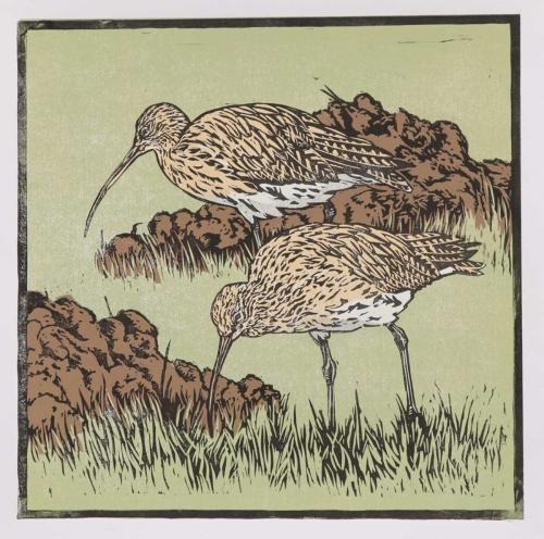 Hatton-John-Curlews-and-Molehills.jpg