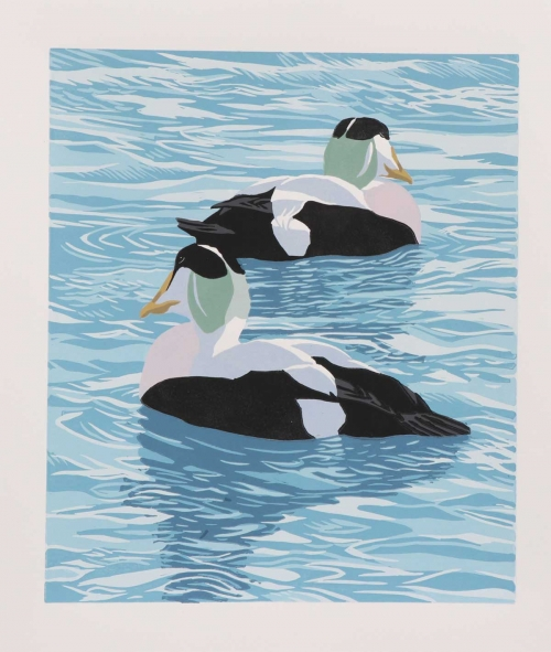 Hatton-John-Swimming-Eiders.jpg