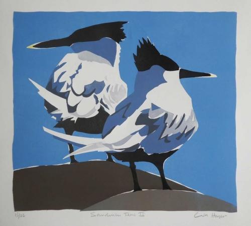 Hooper-Lisa-Sandwich-Terns-II.jpg